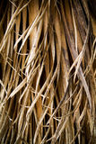 Twisted Fronds. Unusual dry and twisted plant detail close up royalty free stock photo
