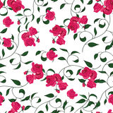 Twisted garden roses seamless vector pattern Royalty Free Stock Image