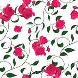 Twisted garden roses seamless vector pattern Royalty Free Stock Photo