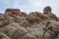 Twisted Giant Rocks and a Joshua Tree Stock Images
