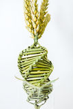 Twisted grain in DNA array Stock Images