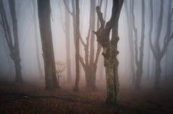 Twisted ha incantato gli alberi in una foresta misteriosa Fotografia Stock Libera da Diritti