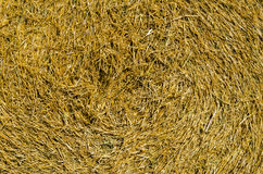 Twisted hay on the field Royalty Free Stock Image