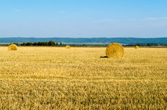 Twisted hay on the field Stock Photography