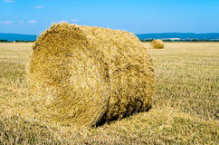 Twisted hay on the field in summer Stock Photo