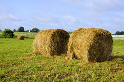 Twisted haystack in meadow animal feed for winter Royalty Free Stock Image