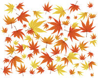 Twisted leaves Royalty Free Stock Photos