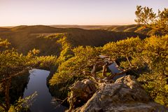 Twisted pine on a rock high above the canyon of the river in sun royalty free stock photo