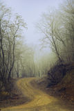 Twisted road in the forest on foggy day Royalty Free Stock Photo