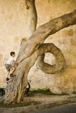 Young boy climbs up on strange shaped tree Royalty Free Stock Images