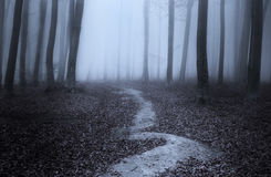 Twisted trail in the blue foggy forest Royalty Free Stock Photo
