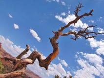 Twisted tree stock photos