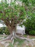 Twisted tree Stock Image