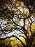 Twisted Tree Limbs Stock Images