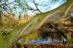 A twisted tree trunk with a bark of green color Stock Photo