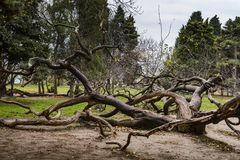 Twisted tree. In the sea garden in Varna, Bulgaria Royalty Free Stock Photos