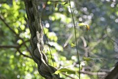 Twisted vines and plant stock photo