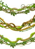 Twisted Wild Lianas Branches Set. Royalty Free Stock Images