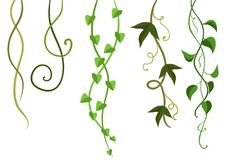 Twisted Wild Lianas Branches Set. Stock Images