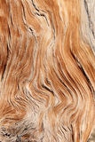 Twisted wood grain. Twisted and contorted distressed wood grain background texture stock images