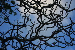 Twisting branches. Blue sky viewed through twisting bare branches Royalty Free Stock Image