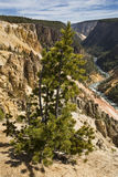 Twisting course of the Yellowstone River through the canyon, Wyo Stock Images