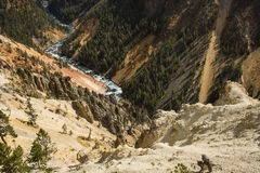 Twisting course of the Yellowstone River through the canyon, Wyo Royalty Free Stock Photo