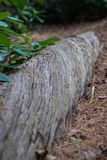 Twisting Log in a Forest Royalty Free Stock Photos