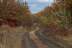 The twisting road in the wood Royalty Free Stock Image