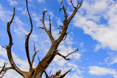 Twisting trees and blue sky Royalty Free Stock Photography