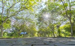 Twisty дороги в парке Стоковая Фотография