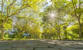 Twisty дороги в парке Стоковое Изображение