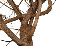 Twisty branch Royalty Free Stock Photos
