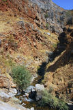 Twisty canyon with a creek in the mountains of Tien Shan in the fall Royalty Free Stock Photography
