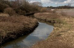 Twisty Fluss Douglas lizenzfreie stockfotografie