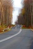 twisty höstskogväg Arkivfoton