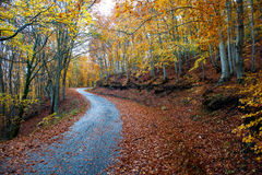 Twisty lantlig väg i skogen Arkivfoton