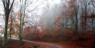 Twisty nedgångväg i skogen Arkivbild