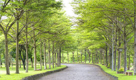 Twisty roads in the park Royalty Free Stock Photography