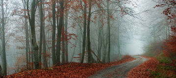 Twisty väg i skogen Arkivbild