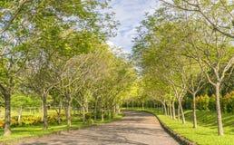 Twisty vägar i parkera Royaltyfria Bilder