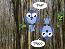 Twit Twoo Royalty Free Stock Images