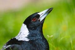 Twittering鸟 图库摄影