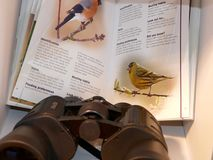 Twittering. A bird book manual with black binoculars Royalty Free Stock Photo