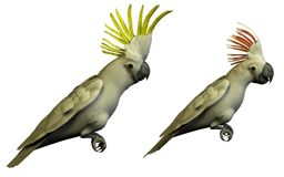 Two 3D parrots isolated Stock Image