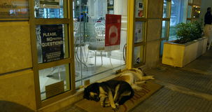 Two abandoned dogs sleeping. THESSALONIKI, GREECE - CIRCA 2015: Two abandoned dogs sleeping near a cafe door at night on the streets of Thessaloniki, Greece stock footage