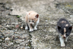 Two abandoned kittens Royalty Free Stock Photo