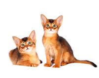 Two abyssinian kittens portrait Stock Photo