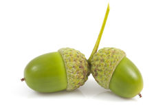 Two acorns Stock Photo