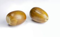 Two Acorns Stock Photo
